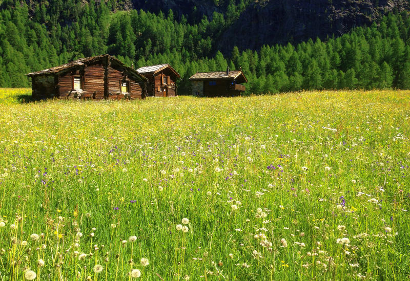 Beautiful panoramic postcard view of picturesque rural mountain scenery in the Alps with traditional old alpine mountain cottages. And wild flowers field on a royalty free stock photos