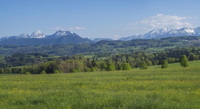 Beautiful panoramic spring rural mountain landscape in the Bavarian Alps with blooming meadow and snow covered mountain royalty free stock photography
