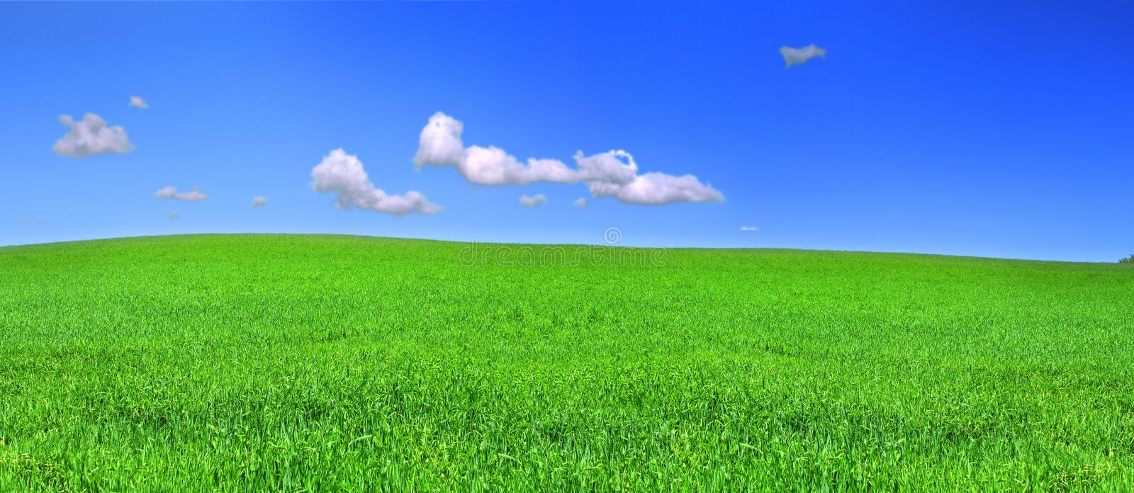 Beautiful panoramic view of peaceful grassland. Blue sky above stock photography