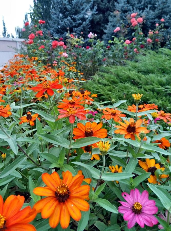 Beautiful park alley with bright red and orange flowers. stock photography