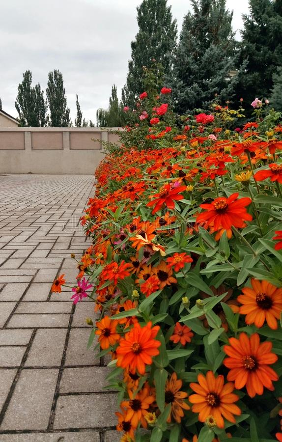 Beautiful park alley with bright red and orange flowers. stock photo