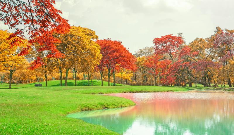 A beautiful park in an autumn season, yellow and orange colorful leaves of the trees on green grass fresh lawn near a lake. Under cloudy sky stock image