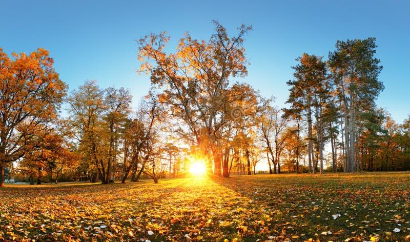 Beautiful park garden in atumn. Fall panorama in park at sunrise stock image