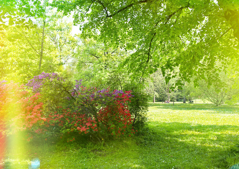Beautiful park garden in spring. Retro style toned picture stock photography