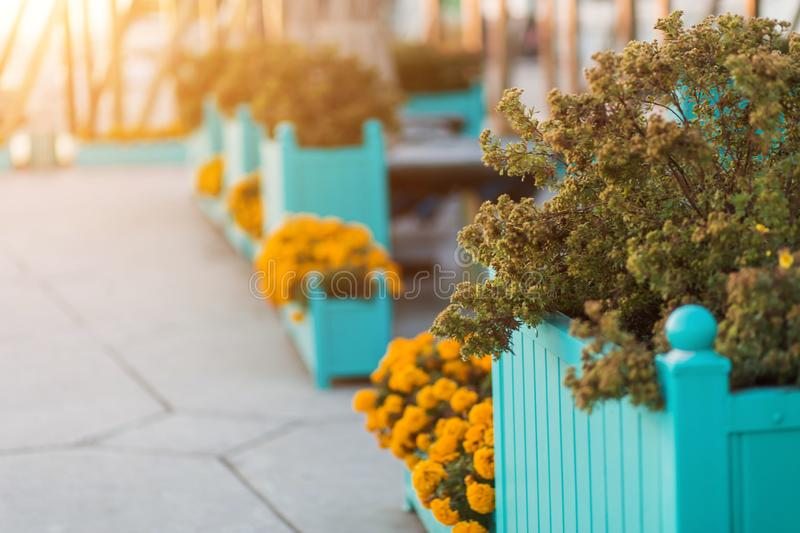 Beautiful Park and garden in summer and autumn. Flowers stock photo