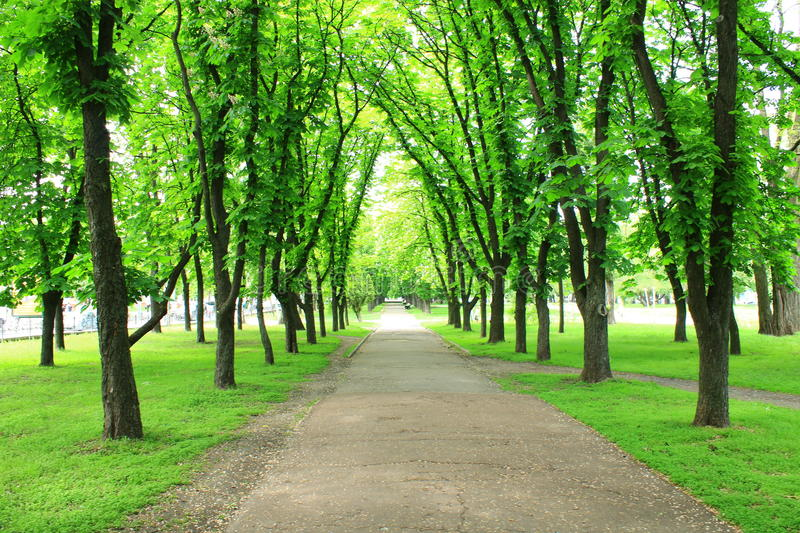 Beautiful park with many green trees stock images