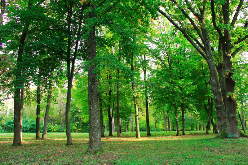Beautiful park with many green trees stock image