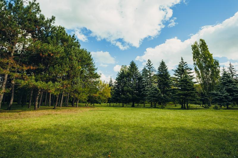 Beautiful park scene in public park with green grass field, green tree plant and a cloudy blue sky royalty free stock images