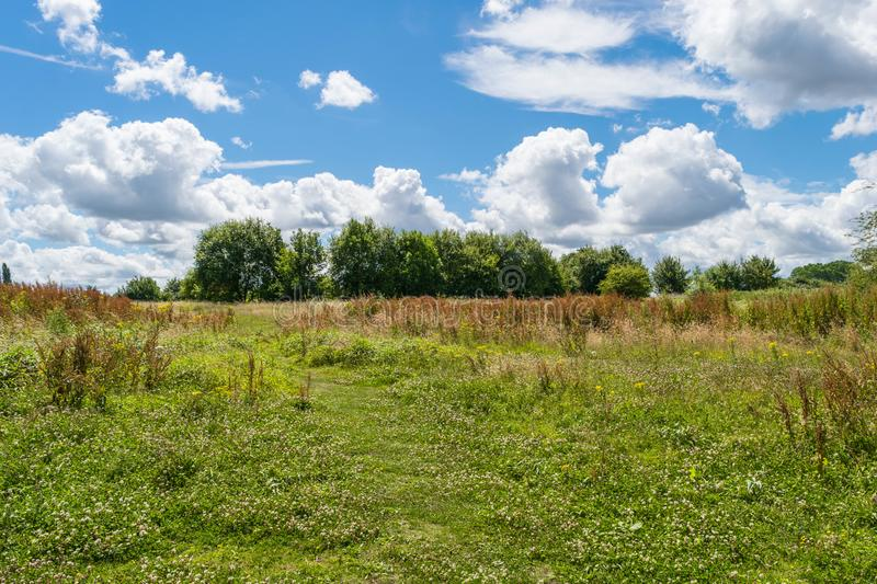 Beautiful park scene in public park with green grass field, green tree plant and a party cloudy blue sky stock image