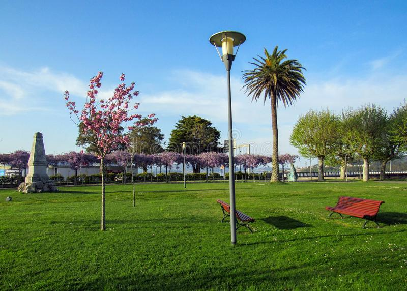 Beautiful Park in spring with red benches, pink blooming cherry tree and Palma tree at sunny day with blue sky royalty free stock images