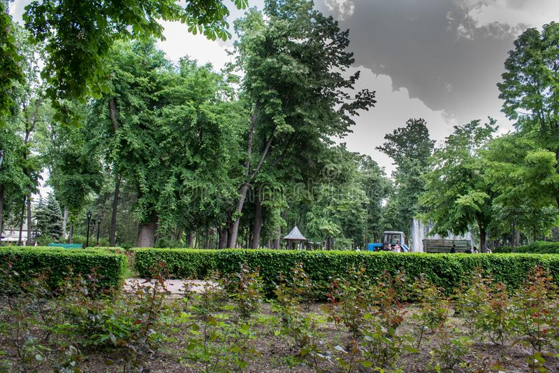 A beautiful park with trees and greenery stock image