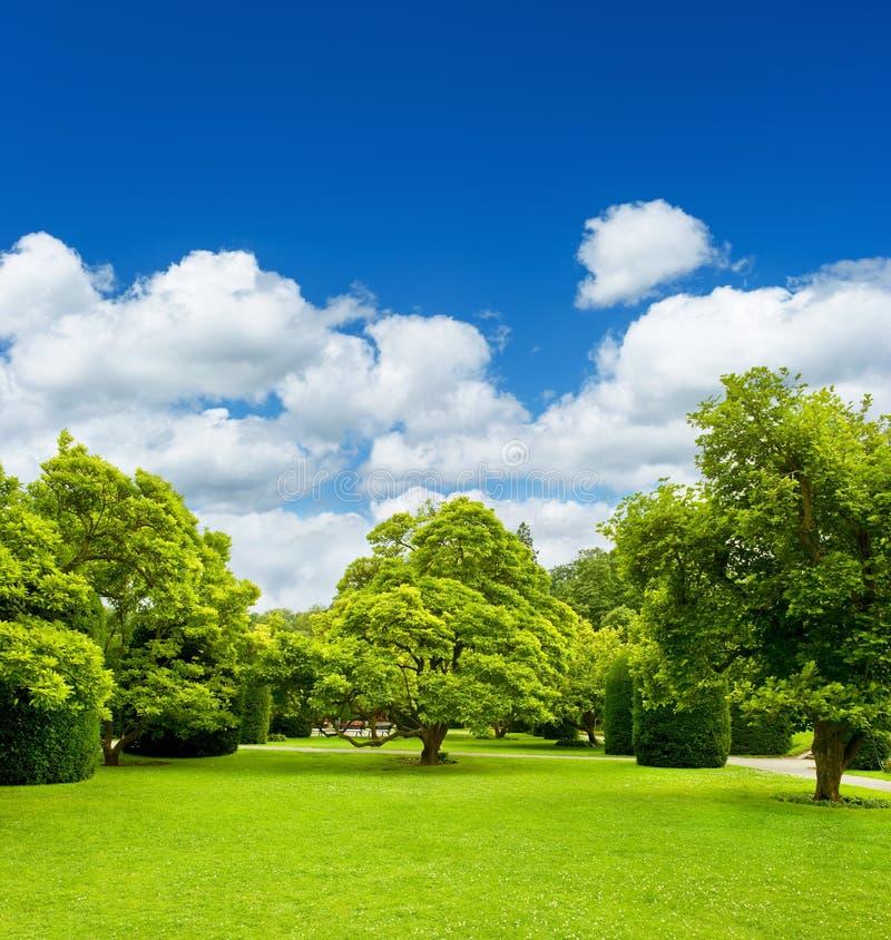 Beautiful park trees over blue sky. formal garden stock photos