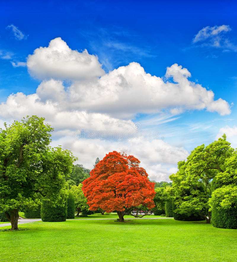 Download Beautiful Park Trees Over Dramatic Blue Sky Stock Image - Image: 39348787