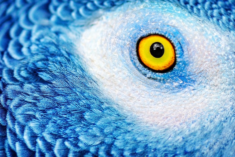 Beautiful parrot eye stock image