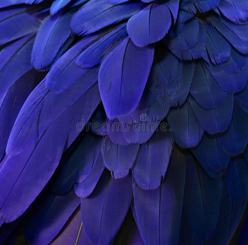 Free Beautiful Parrot Feathers Stock Images - 40097944