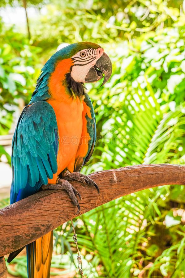 Beautiful parrot holding branch in national park stock images
