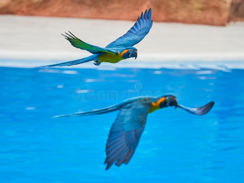 Beautiful parrots in zoo at Loro Park Loro Parque, Tenerife, Canary Islands, Spain.  royalty free stock photography