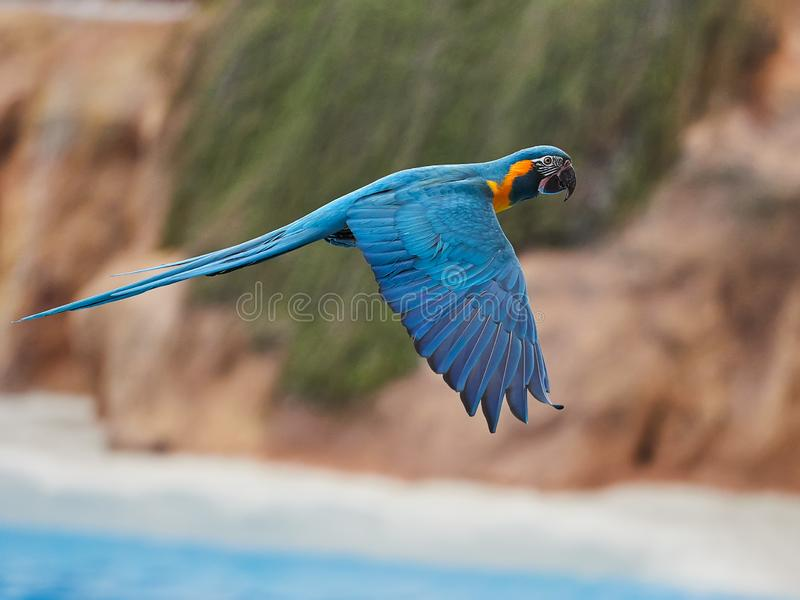 Beautiful parrots in zoo at Loro Park Loro Parque, Tenerife, Canary Islands, Spain.  stock images