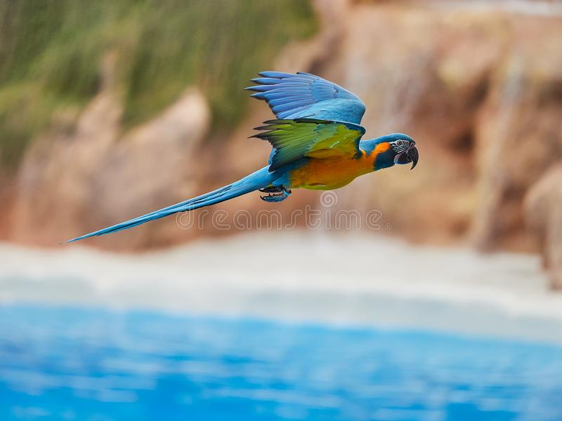 Beautiful parrots in zoo at Loro Park Loro Parque, Tenerife, Canary Islands, Spain.  royalty free stock images