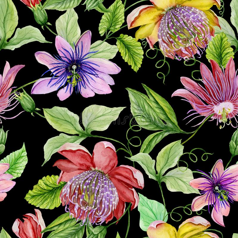 Beautiful passion flowers passiflora on climbing twigs with leaves and tendrils on black background. Seamless floral pattern. Watercolor painting. Hand painted vector illustration
