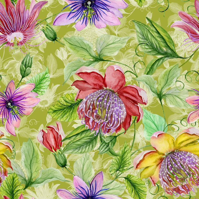 Beautiful passion flowers passiflora on climbing twigs with leaves and tendrils on green background. Seamless floral pattern. Watercolor painting. Hand painted stock illustration