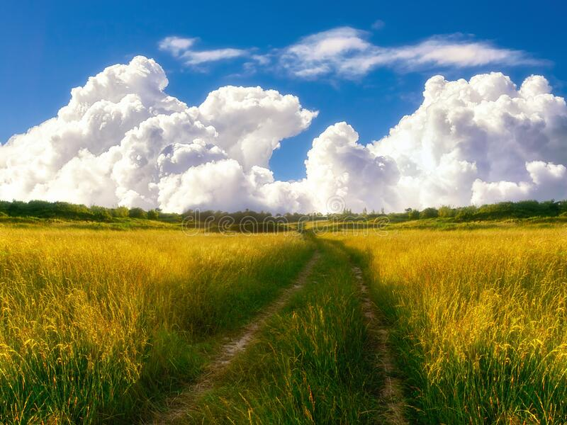 beautiful path in countryside with meadows royalty free stock images
