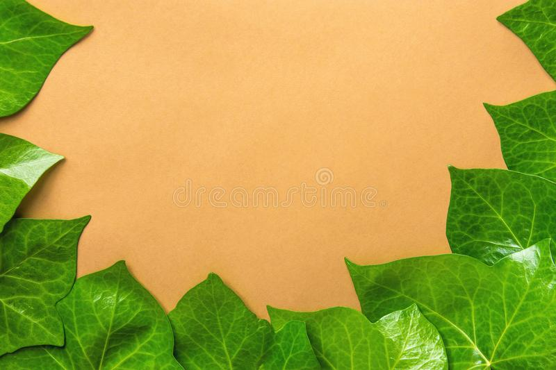 Beautiful Pattern from Fresh Green Ivy Leaves Forming Frame Border on Beige Background. Banner Poster Botanica. Beautiful Pattern from Fresh Green Ivy Leaves stock photos