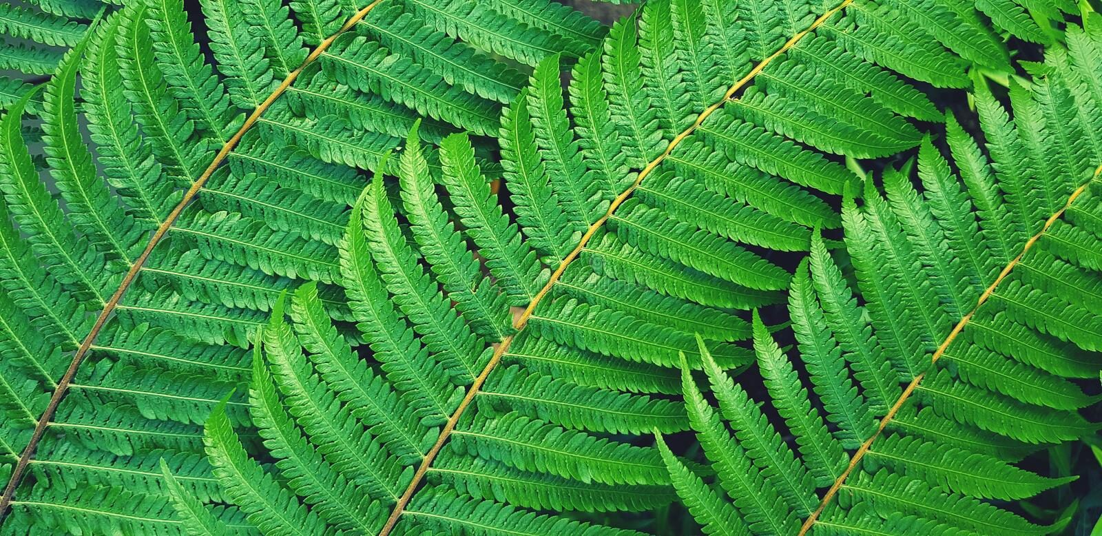 Beautiful pattern of green fern leaves with blue filter style for background royalty free stock images