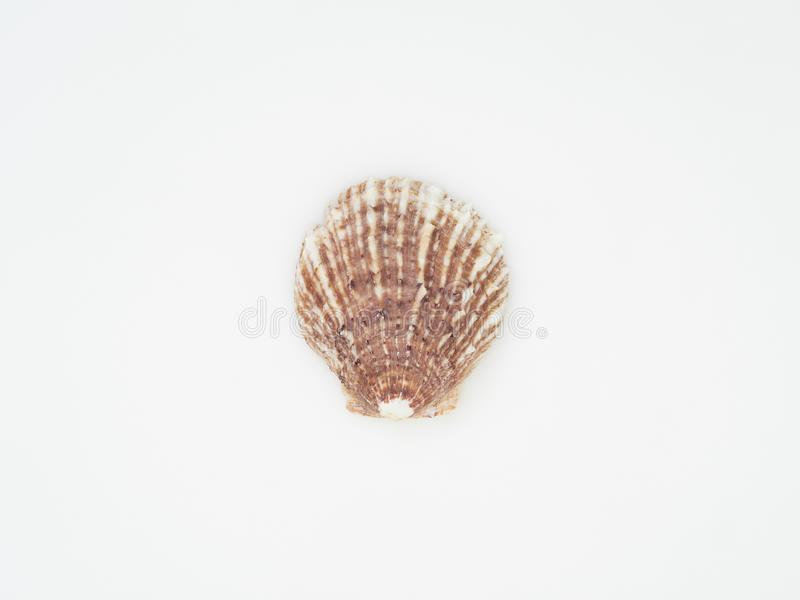 Beautiful patterned shells stock images