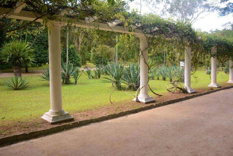 Parkway in Rio de Janeiro Botanical Garden. royalty free stock images