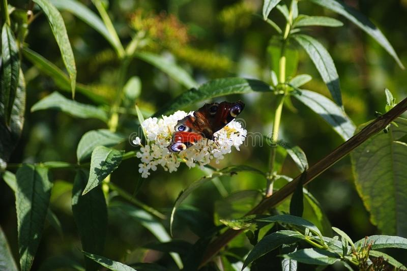Beautiful butterfly on a flower stock photo