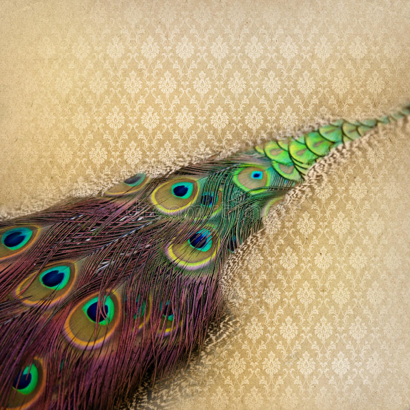 Download Beautiful Peacock Feather Background Stock Image - Image of abstract, pattern: 39501291