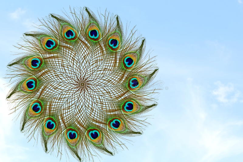 Beautiful peacock feather in sky background stock image image of bright krishna 77304741 - Beautiful peacock feather ...
