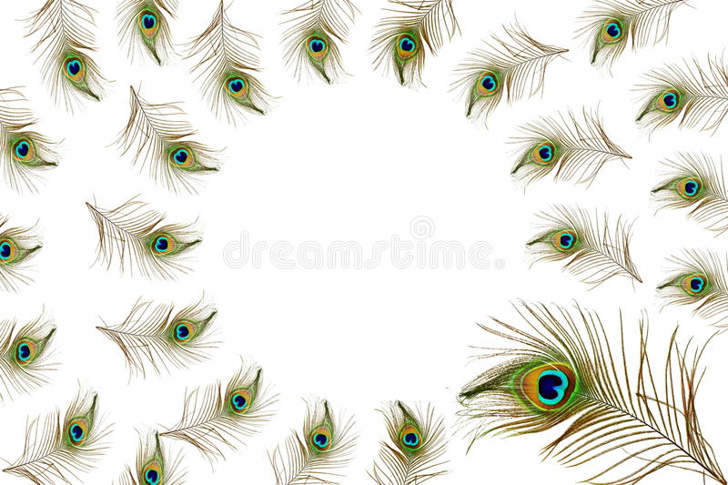 Beautiful peacock feathers as background with text copy space stock illustration