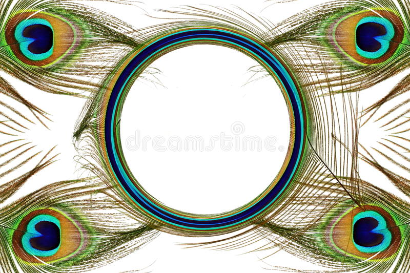 Beautiful peacock feathers as background with text copy space royalty free illustration