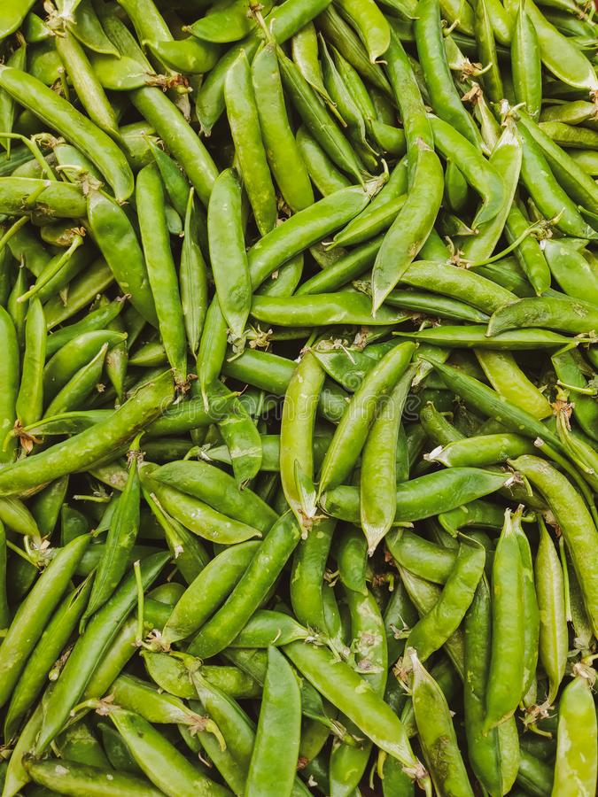 Beautiful Peas i clicked some days back. Beautiful peas clicked some days back royalty free stock photography