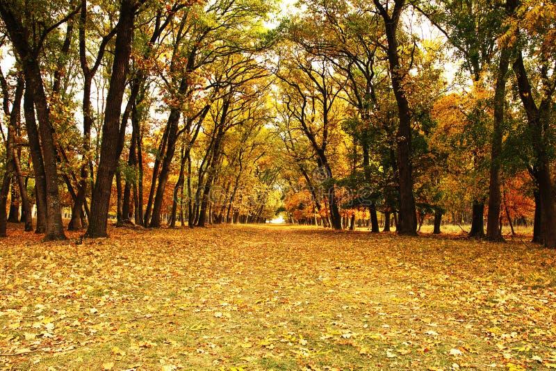 Beautiful pedestrian path in autumn woods. Beautiful pedestrian path in orange autumn woods in evening light stock photos