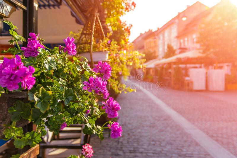 Beautiful pedestrian street in a medieval town with flowers on the terrace on a summer sunrise in Sibiu, Romania stock image