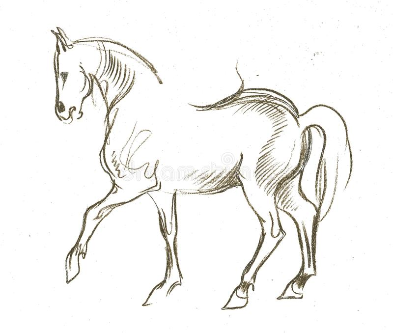 Beautiful Nature Pencil Drawings: The Horse Stock Illustration