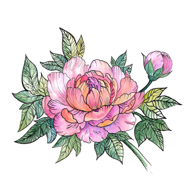 Beautiful Peony flower, bouquet of peonies, tattoo. Beautiful Peony flower, bouquet of peonies, watercolor graphics, tattoo royalty free illustration