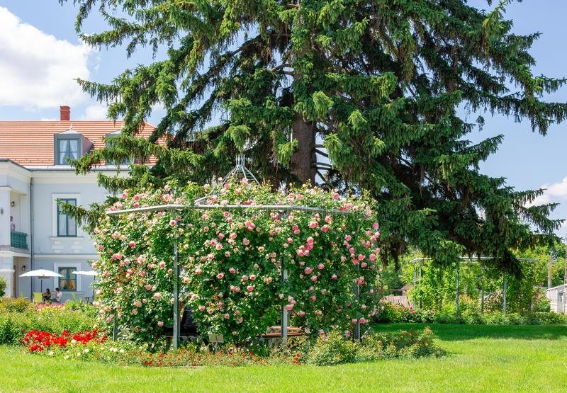 Beautiful pergola overgrown with climbing pink roses Eden in park royalty free stock photo