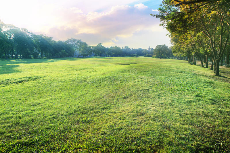 Beautiful perspective landscape of green environment park and sm. All garden with morning sun shining light use as natural background,backdrop royalty free stock image