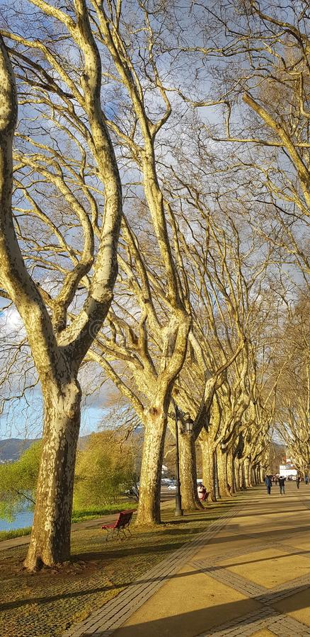 Perspective trees view royalty free stock image