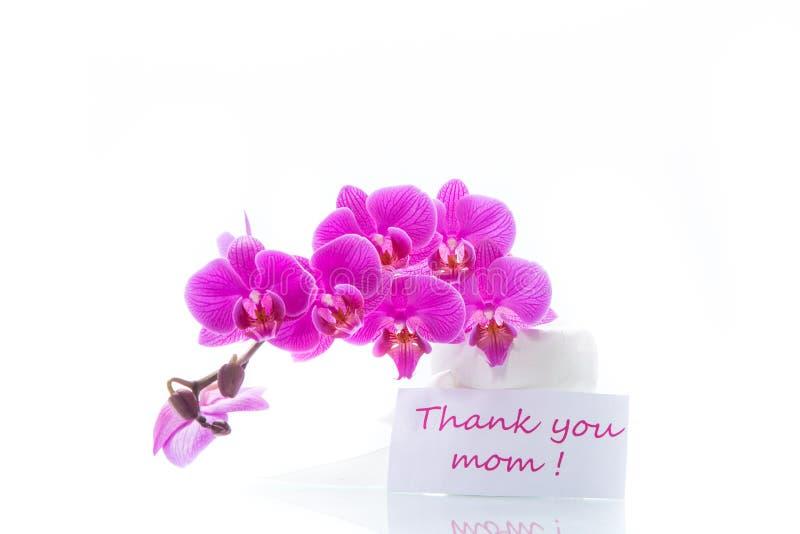Beautiful Phalaenopsis orchid flowers stock photos