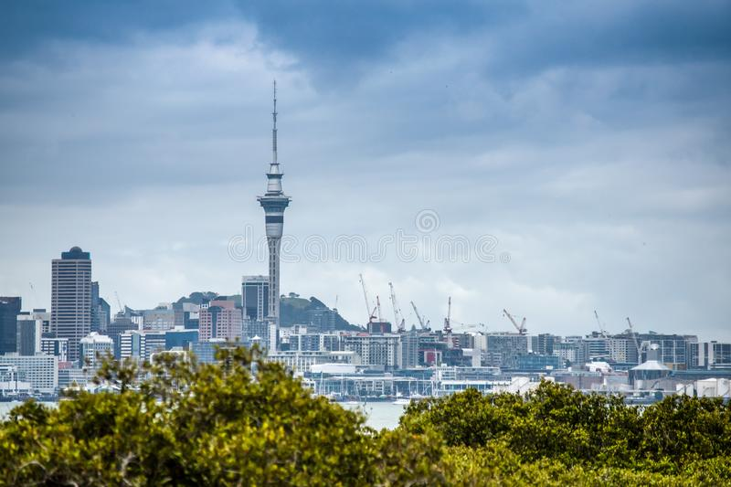 A beautiful photo of Auckland city with lots of cranes building appartment buildings royalty free stock images
