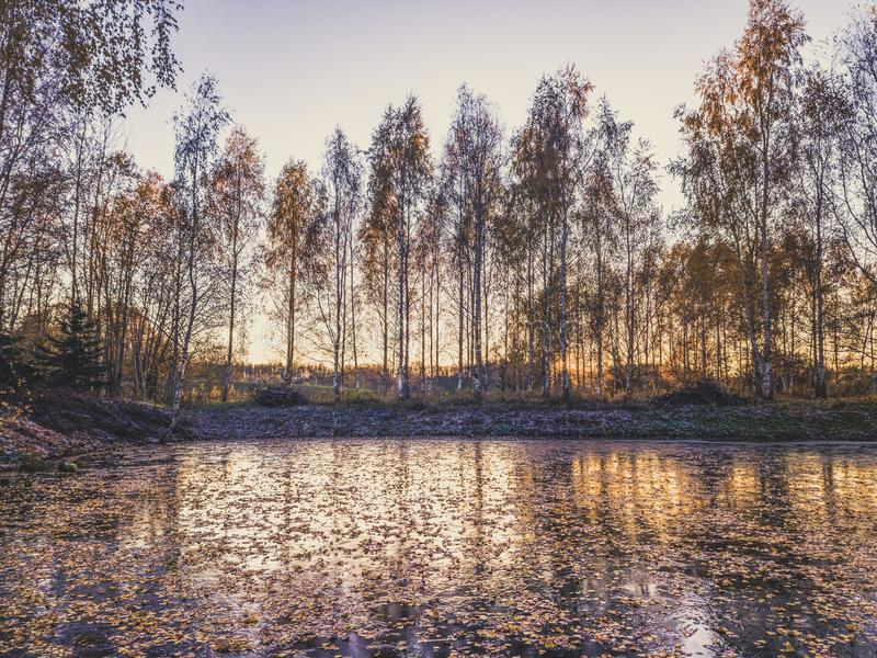 Photo of a Frozen Lake in an Autumn Day - vintage look edit royalty free stock images
