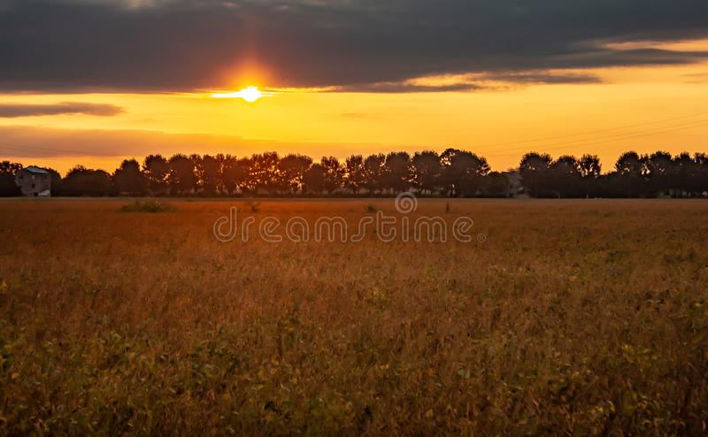 Beautiful photograph of the sunrise in a campaign in September when the plantings begin to dry up and become golden yellow, almost. A painting royalty free stock photo
