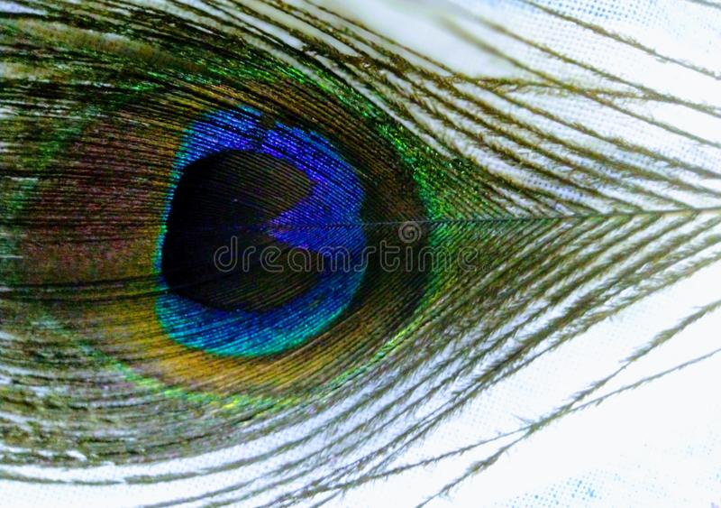 Beautiful pic of peacock feather royalty free stock photo