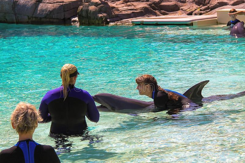 Beautiful picture from delphine show on Sea World park . San Diego. USA. royalty free stock photo