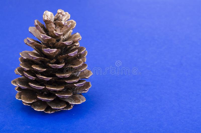 Beautiful pine cone for decoration on blue background stock photos